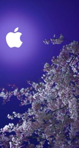 林檎と夜桜.jpg